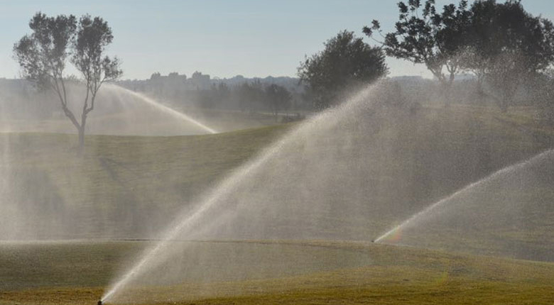 greens being watered